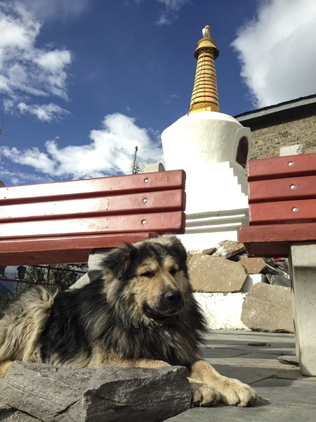 http://growingforest.net/files/gimgs/th-24_HundSpiti.jpg